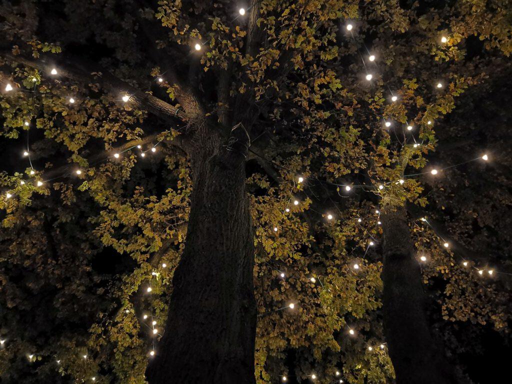 LED-Beleutung - Ein Blick in die Baumkrone